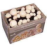 Hawlik Pilzbrut - weiße Champignon Pilz-Zuchtset - Pilz Kultur zum selber züchten - frische Champignon Pilze ernten (Groß)