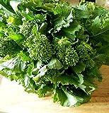 Italienischer Spargelbrokkoli - Stängelkohl - Cima di rapa - Brokkoli - 500 Samen