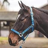 Mark Todd Sicherheitshalfter für Pferde, königsblau, Pony
