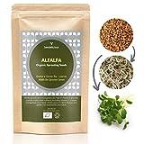 Seedelicious Alfalfa Bio-Sprossen-Samen - Hohe Keimfähigkeit Alfalfasamen zu Mikrogrüns- Schnell wachsendes Sprossen Superfood für besonders gesunde Ernährung   500g