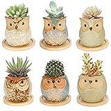 Colmanda 6er-Set Mini Blumentöpfe, Sukkulenten Übertöpfe Töpfe Eulen Töpfchen Keramik mit Basis, Beton Mini Blumentopf für Kaktus Miniaturpflanzen, Dekorvase Sukkulenten Töpfe (A)