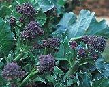 Brokkoli Purple Sprouting Early - 250 Samen