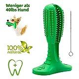 JarGaBo Hundezahnbürste Stick, Hunde mit Zahnpflege, Kauspielzeug aus Naturgummi Molar Stick mit Reinigungsbürsten, Grün