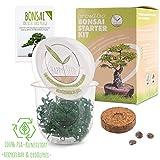GROW2GO Bonsai Starter Kit Anzuchtset inkl. GRATIS eBook - Pflanzset aus Mini-Gewächshaus, Samen & Erde - nachhaltige Geschenkidee für Pflanzenfreunde (Tamarinde)