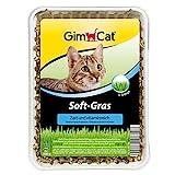 GimCat Soft-Gras, Hochkeimfähiges und besonders weiches Katzengras, Zartes und vitaminreiches Gras für Katzen, Schnelle Aufzucht in nur 5 bis 8 Tagen, 1 Schale (1 x 100 g)
