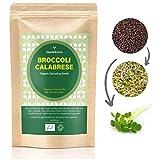 BROKKOLI CALABRESE Bio-Keimsprossen-Samen 250g - Hoher Sulforaphan-Gehalt | Hohe Keimfähigkeit zu Mikrogrüns- Schnell wachsendes Sprossen Superfood in 6 Tagen
