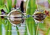 Dardenne, C: Monde sensible (Calendrier mural 2020 DIN A4 ho: En macro ou au télézoom, divers animaux autour de nous... (Calendrier mensuel, 14 Pages ) (Calvendo Animaux)