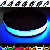Fun Pets Hundesicherheitshalsband mit ultraheller, wiederaufladbarer LED mit hervorragender Sichtbarkeit und erhöhter Sicherheit Medium (40cm - 50cm / 15.7' - 19.7') Blau