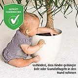 reer Pflanzenschutz-Netz für Blumentöpfe bis 30 cm Durchmesser, damit Dein Kind keine Blumenerde isst