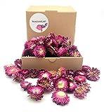 Kunstharz.Art Getrocknete Blumen als Landhaus Stil Deko Strauß und zum Kranz Basteln (Violett Strohblumen)