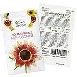 Sonnenblumen Samen Abendsonne (Helianthus annuus): Premium Sonnenblumen Saatgut für hohe Sonnenblume, Sonnenblume Saat zur Anzucht von ca. 30 Pflanzen – Insektenfreundliche Blumensamen von OwnGrown