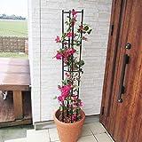 QILIN Rankhilfe Halter, Pflanzen-Aufzucht-Turm Für Den Garten, Ideal Zum Klettern Von Pflanzen, Blumen Und Reben Schwarz