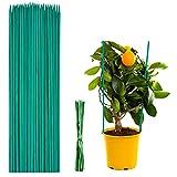 Pflanzenstützen 50 Stück,Pflanzstab Bambus 30 cm,Pflanzenstäbe,Grüne BlumenstäBchen BambusstäBe mit 50 Stück Metallischen Bindebändern,für Haus Garten Kletterpflanze Erweiterung der Pflanzenstütze