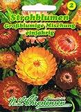 Strohblume Großblumige Mischung einjährig 'Helichrysum bracteatum 'Trockenblume