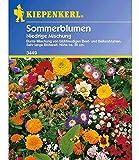 Niedriger Sommerblumen-Mix, 1 Tüte Samen