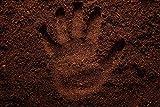 100% natürlichen Wurmhumus kaufen - 10 Liter - Humus Erde Wurmdünger Wurmerde Naturdünger Komposterde (10 Liter)