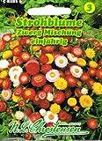 Strohblumen Zwerg Mischung Helichrysum bracteatum Trockenblume
