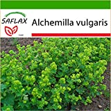 SAFLAX - Heilpflanzen - Frauenmantel - 100 Samen - Mit keimfreiem Anzuchtsubstrat - Alchemilla vulgaris