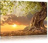 Pixxprint Baum als Leinwandbild | Größe: 80x60 cm | Wandbild | Kunstdruck | fertig bespannt