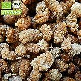 1000g Bio Maulbeeren getrocknet weiß Rohkost | 1 kg | unbehandelt & ungeschwefelt | ohne Zucker und Zusätze | Trockenfrucht 100% Naturprodukt | kompostierbare Verpackung | STAYUNG - DE-ÖKO-070