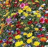 Beautytalk-Garten Blumenmischung Wildblumen Samen mehrjährig winterhart Blumenwiese Bienenfreundlich Blumensamen Bodendecker Bienenwiesen Garten Blumen