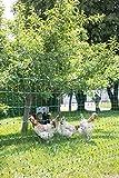 Kerbl 292219 Geflügelnetz 25 m, 112 cm Doppelspitze, ohne Strom, grün