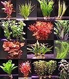 16 Bunde mit zusammen über 120 Aquarium-Pflanzen - großes buntes Sortiment für EIN 200 Liter Aquarium, Wasserpflanzen für Vorne, Mitte und Hinten